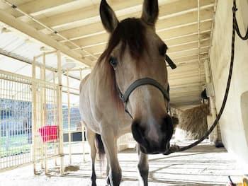 equitation-loisir-enfant-epargne